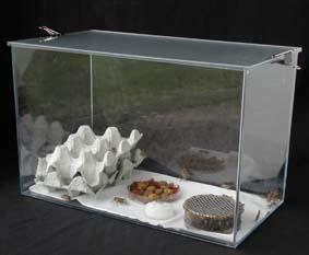 Elevages de grillons